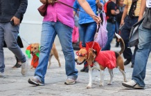 Oaxaca Dog Parade