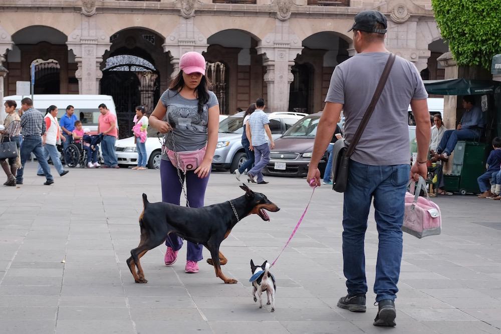 Morelia pink dogs