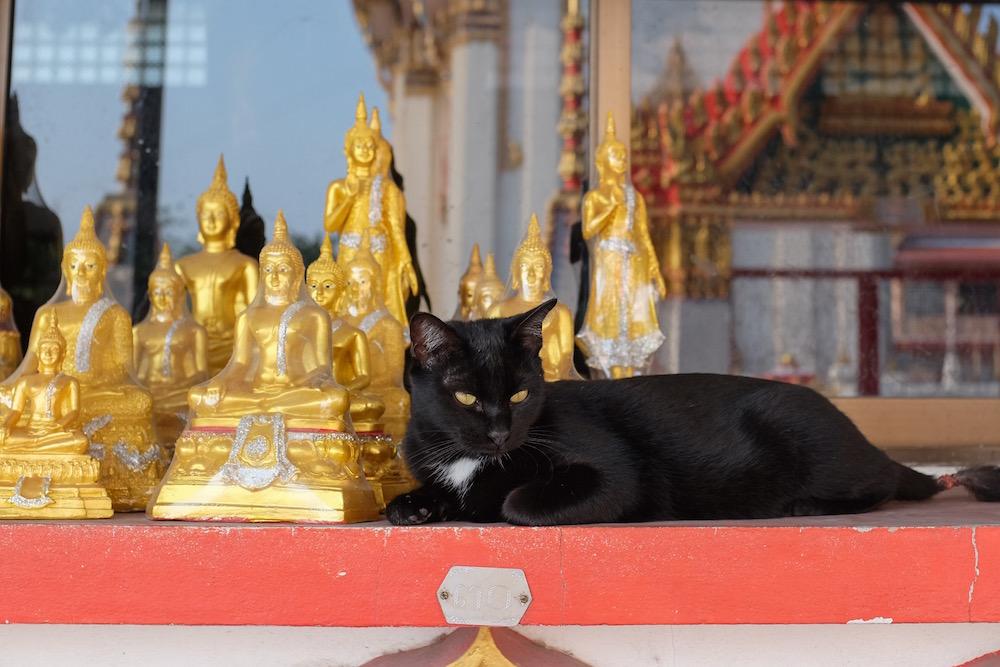 Cat with Buddha