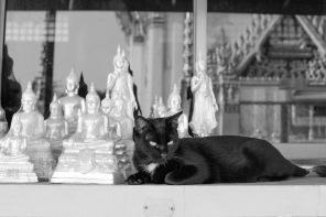 Cat at a Wat