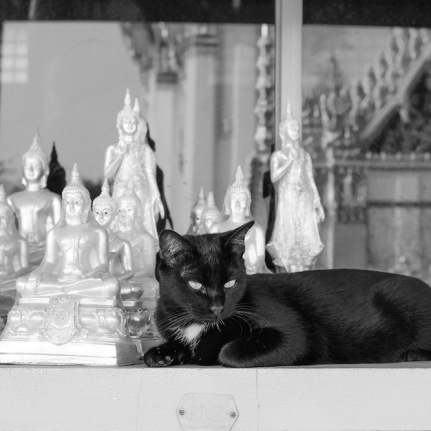 Cat at a Wat