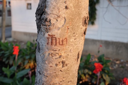 Thai name carved in a tree
