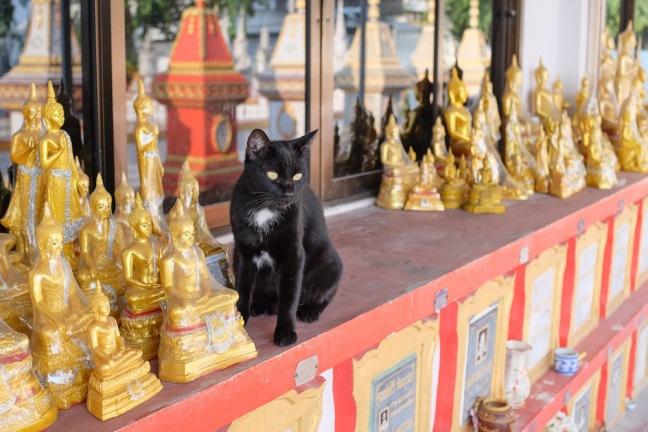 Thai soi cat