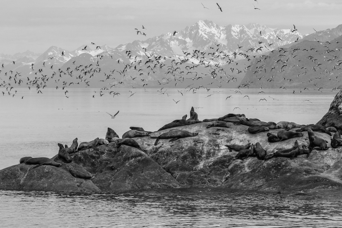 Glacier Bay NP in Black and White