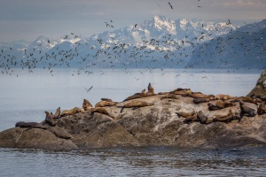 Seagulls and Sea lions