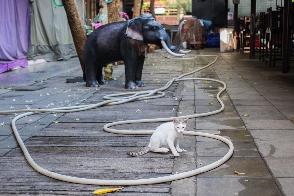 catnip Bangkok