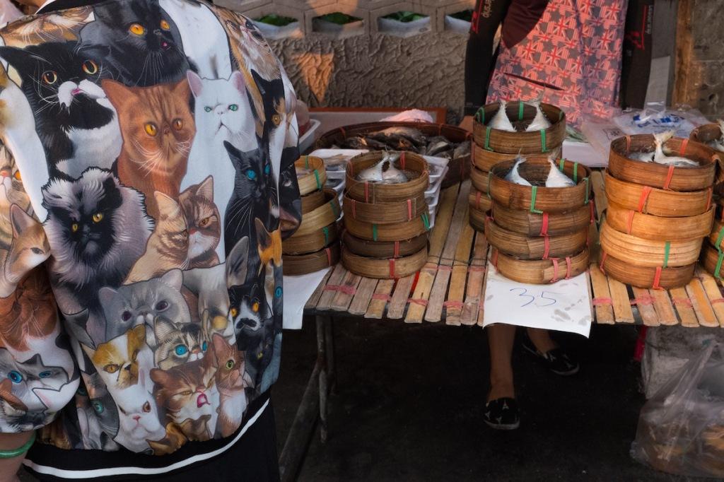 Cats and Fish Bangkok