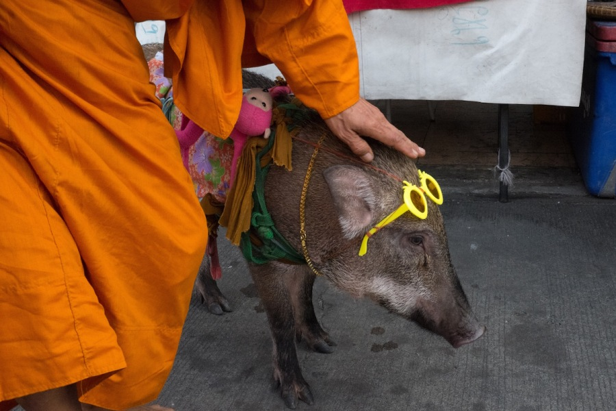 Monk with Pig in Bangkok