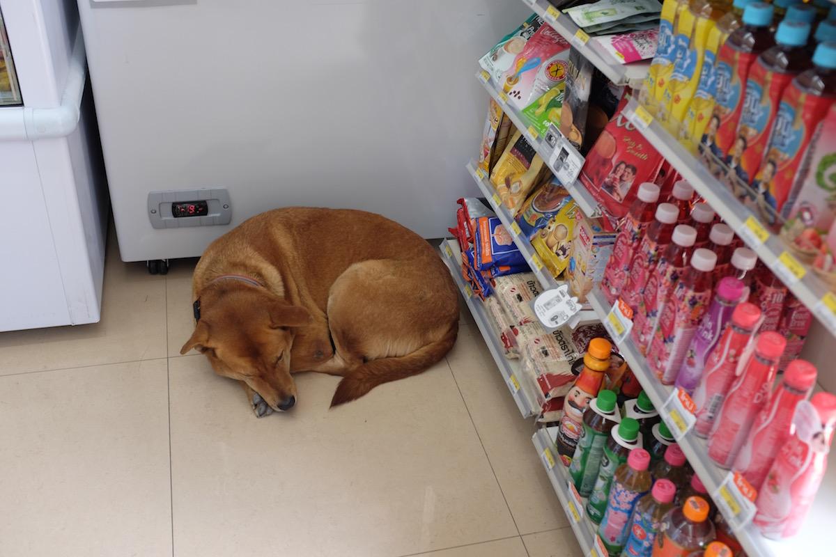 Bangkok 7-11 dog