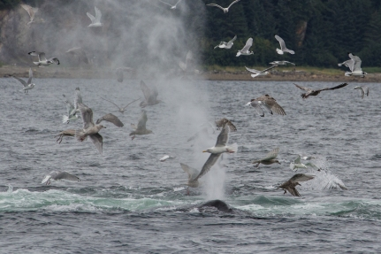 seagulls and whales