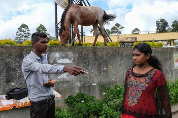 Sri lanka street photo with horse