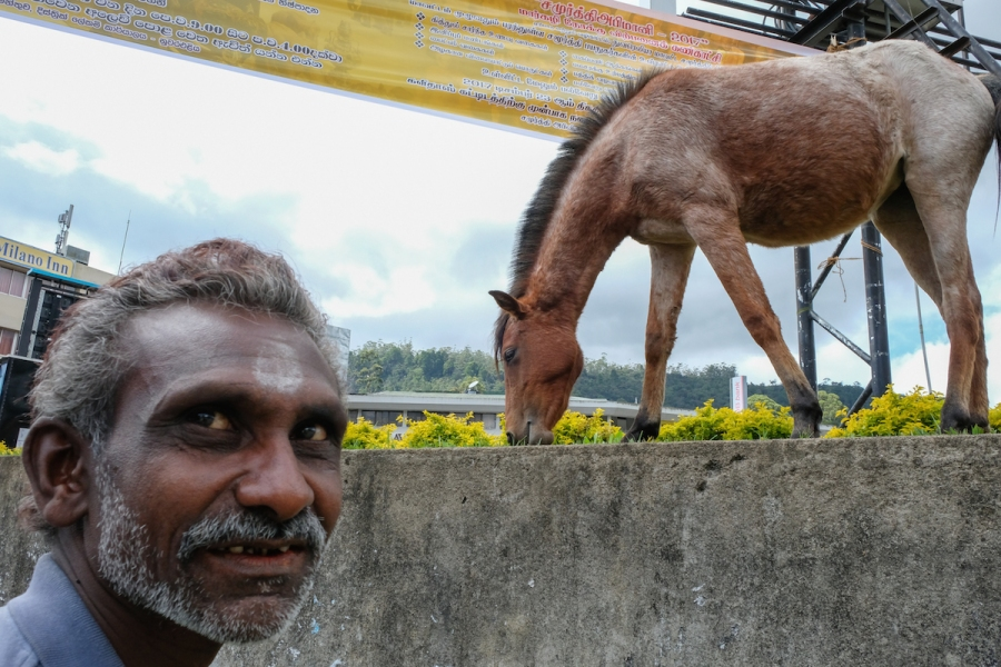 Street photo with horse