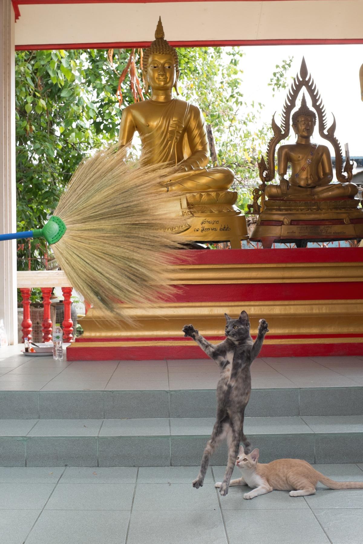 Bangkok cats in temple