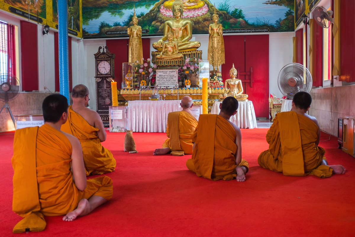 Bangkok Cat with Monks