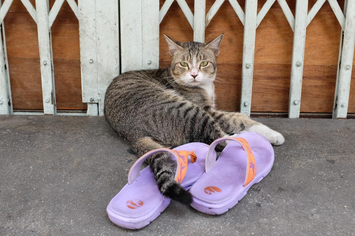 Cat in Bangkok