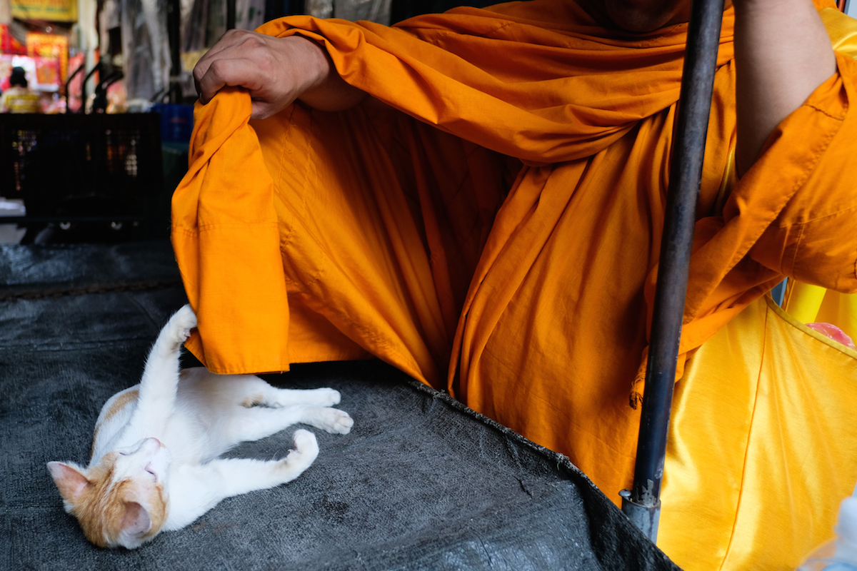 Cat with monk in Bangkok
