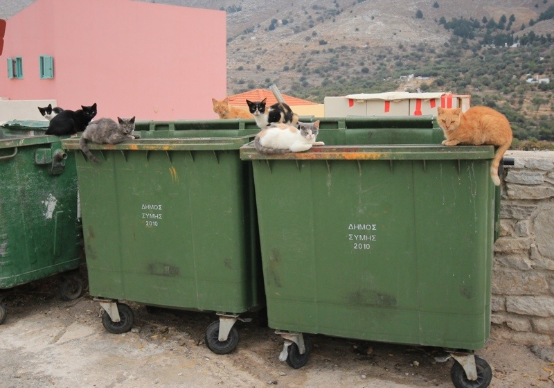 Greece Dumpster Cats