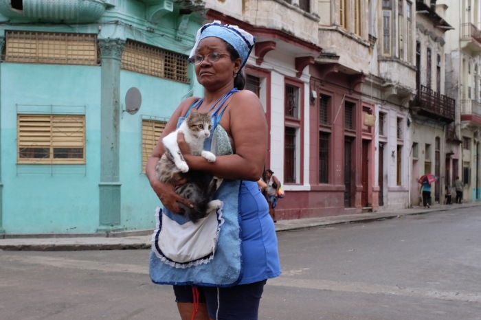 Cat in Havana