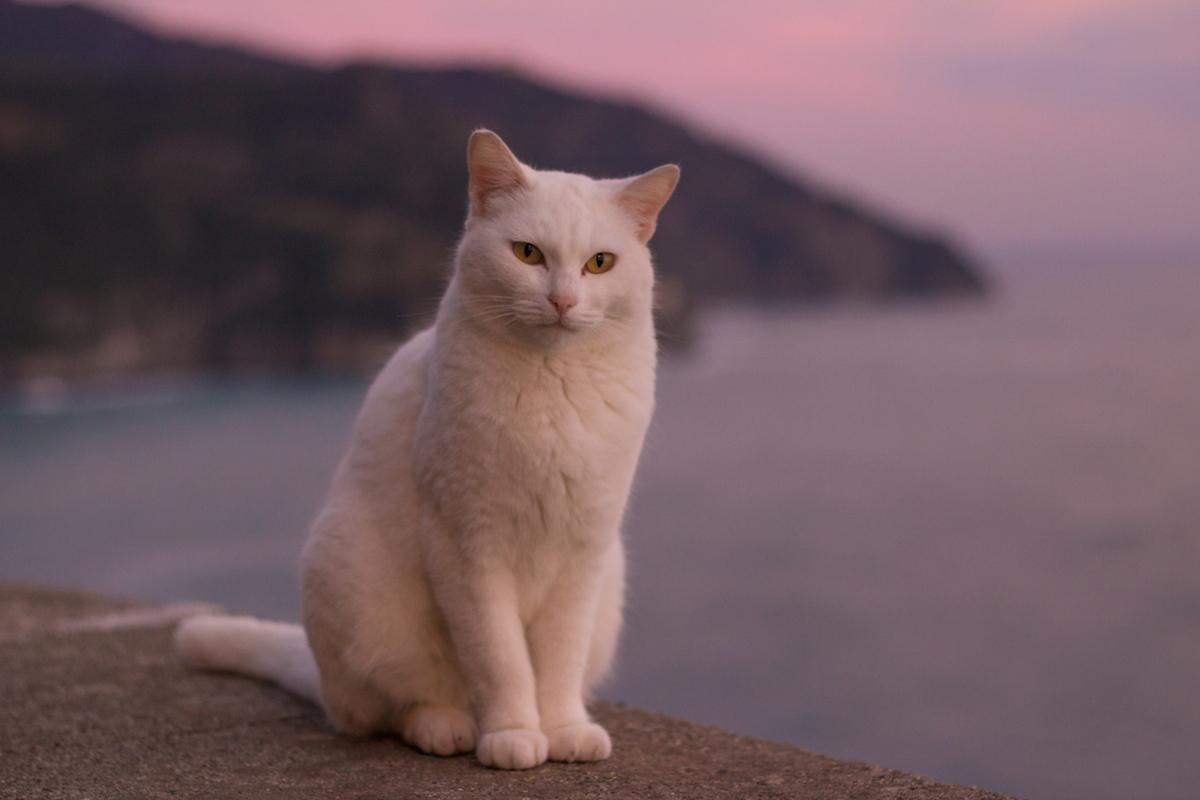 Street photography cat Cinque Terra