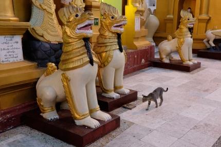 Cat at Shwedagon