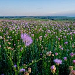 Wildflowers Oklahoma